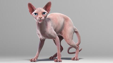 Sphynx Cat Pink Rigged