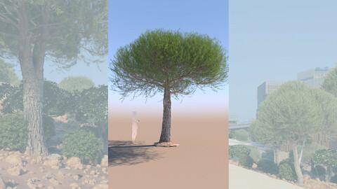 3D tree pinus pinea stone pine mature c
