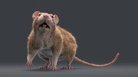Rat Fur Rigged Brown
