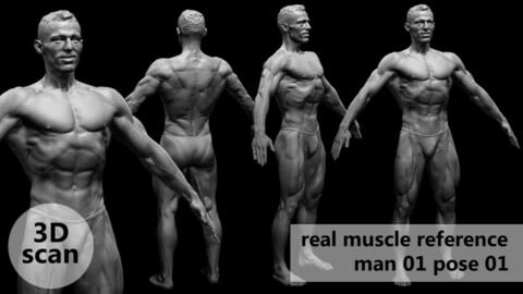 3D scan real muscleanatomy Man01 pose 01