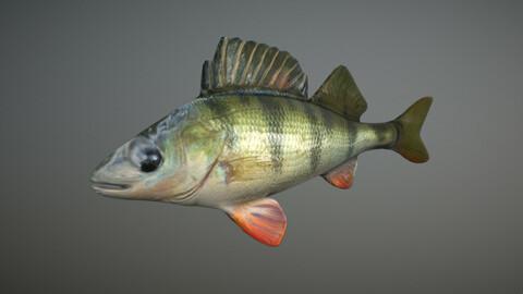 Bass - Fish