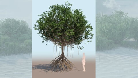 rhizophora mangle mangrove 3D tree b