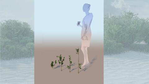 rhizophora mangle mangrove 3D grasses