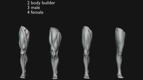 Leg Anatomy Refrence 3D By GloriaTheAnimator