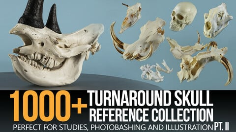 1000+ Skull Reference Collection (Pt. II)