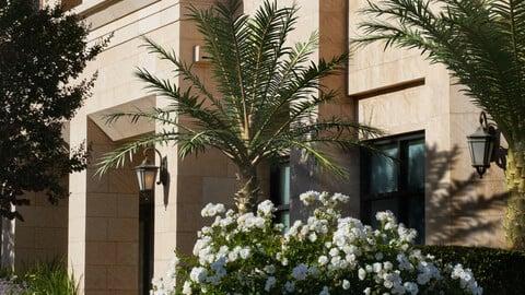 2021 PBR Silver Date Palm Collection - Phoenix Sylvestris