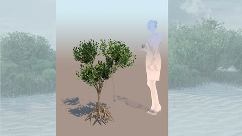 rhizophora mangle mangrove 3D bush a