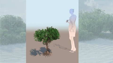 rhizophora mangle mangrove 3D bush b