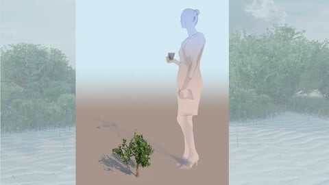 rhizophora mangle mangrove 3D bush c