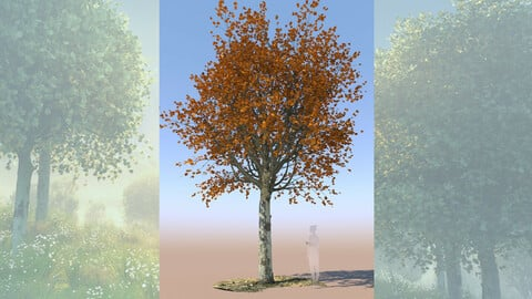 maple acer 3D tree mature autumn b