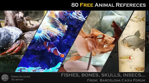 🖼️  Ref Free Pack - Animals 🐠 Reference (80) - [Barcelona Caixa Forum]
