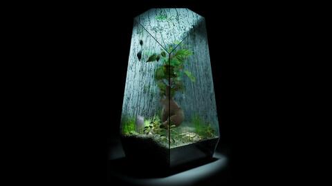 Foggy Wet Bonsai Terrarium