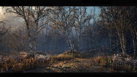 Autumn Birch Forest Environment  [UE4]
