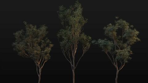 manuka tree asset pack