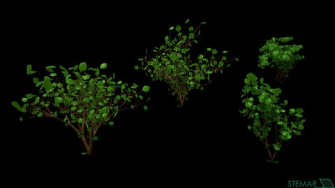 3D Bush Set HD Foliage Assets