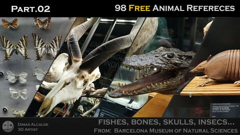 🖼️ Ref Free Pack - Animals 🐊 Reference (98) - [Barcelona Museum of Natural Sciences] Part.02