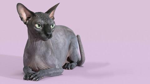 Sphynx Cat Black Rigged
