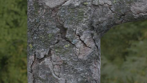 Tree Bark 8 PBR Material
