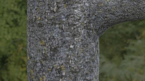 Tree Bark 11 PBR Material