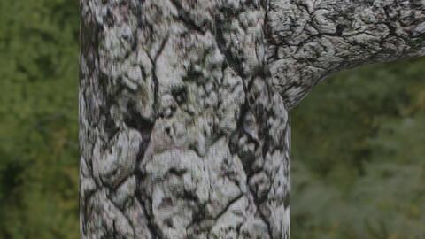 Tree Bark 12 PBR Material