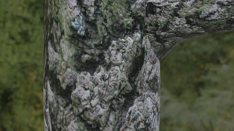 Tree Bark 13 PBR Material