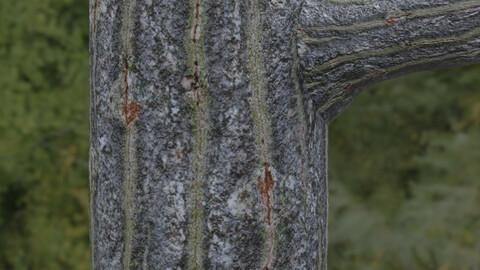 Tree Bark 14 PBR Material