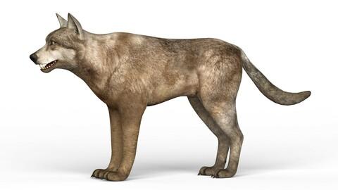 Realistic Wolf 3D Model