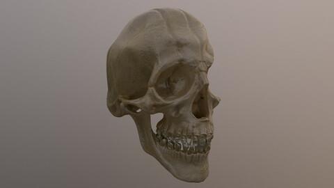 Damaged Skull