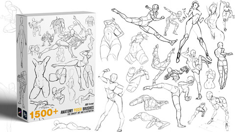 1500+  Character Pose/Anatomy study  Brushes |BUNDLE | Demo Video