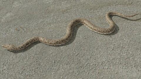 Rigged python  3D model