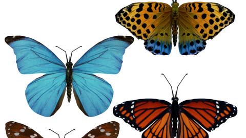 Beautiful Animated Butterflies Set 3D Model