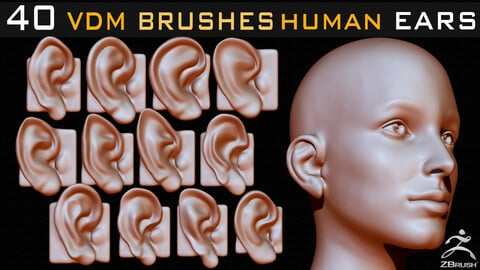 40 Zbrush VDM Human Ears Brushes + Alpha + FBX + OBJ