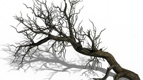 Winter snow - dead tree 02
