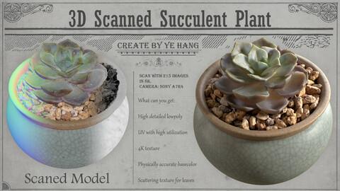 3D Scanned Succulent Plant - 01