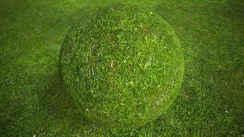 Grassl (270) - Photogrammetry based Environment Texture