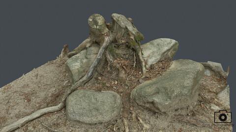 Broken tree_0006(Photogrametry.Photoscan.obj,Photo)
