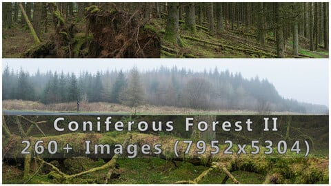 Coniferous Forest II Photopack - 260+ Images