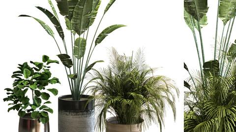 plant set 045