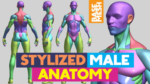 Stylized Male Anatomy base mesh