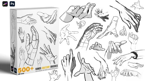 Hands Anatomy Brushes | Study Brushes | Concept art [500+]