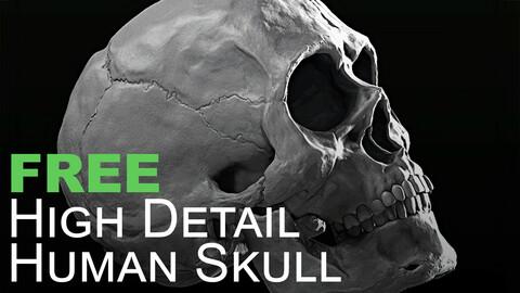 FREE High Detail Human Skull