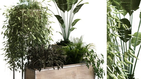 plant set 049