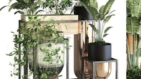 plant set 053