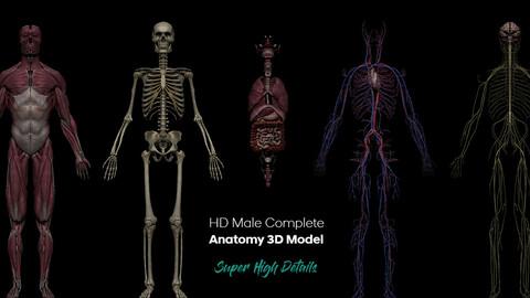 HD Male Complete Human 3D Anatomy Model