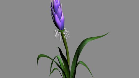 Elven Villa - flowers 03