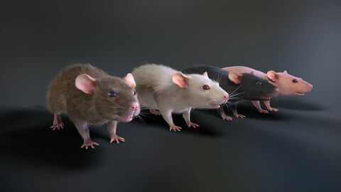 Rats with low poly fur