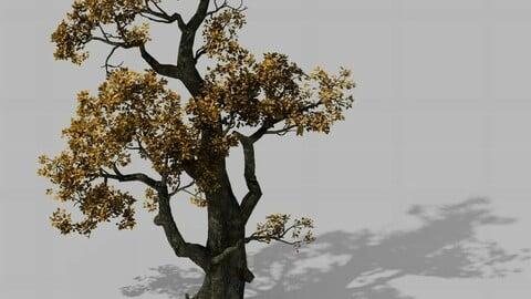 Brutal tribe - tree 16