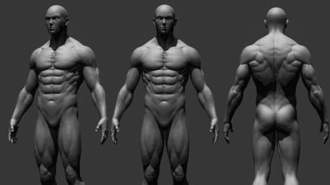 Realistic Male Full Body
