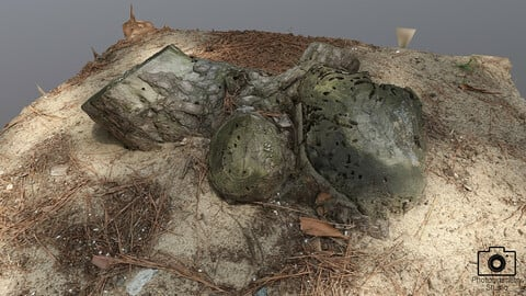 Broken tree_0008(Photogrametry.Photoscan.obj,Photo)