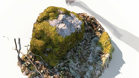 Forest stone formation a 3D model